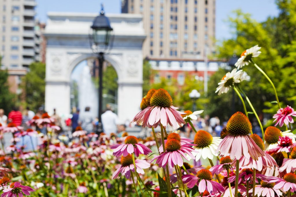 washington square park in spring with flowers